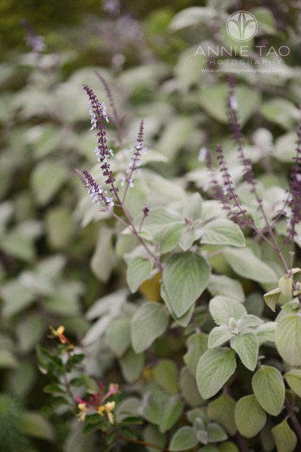 san-francisco-lifestyle-photography-light-purple-flowers