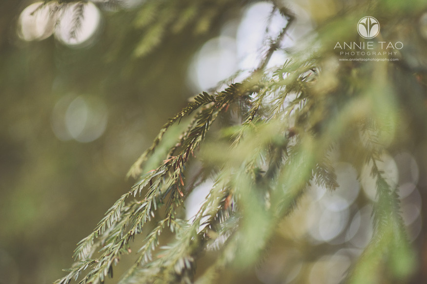 East-Bay-lifestyle-photography-closeup-branch-of-redwood-tree