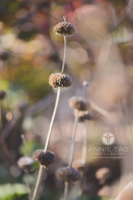 East-Bay-lifestyle-photography-interesting-dried-nature-balls-haha