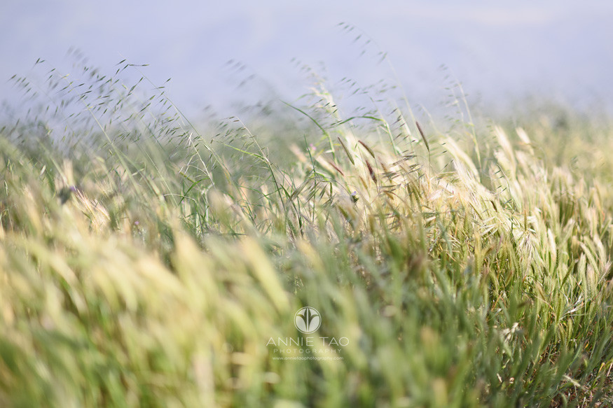 east-bay-lifestyle-photography-wild-grass-on-windy-day