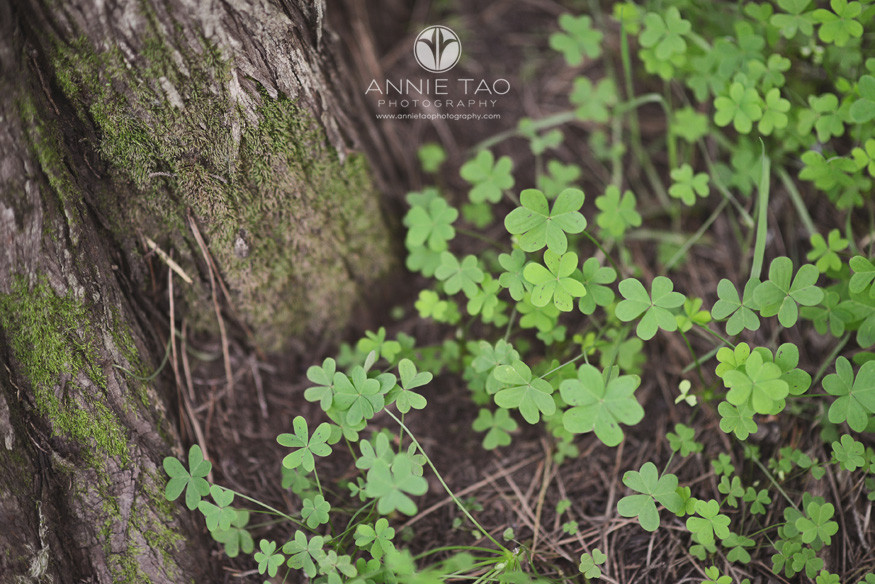 San-Francisco-lifestyle-photography-clovers-and-moss