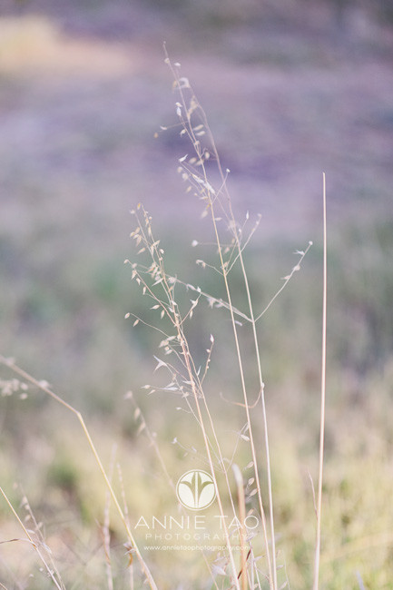 San-Francisco-Bay-Area-lifestyle-photography-dry-grass-or-weeds