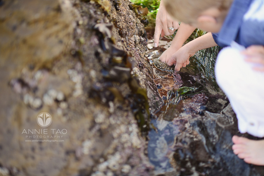 Bay-Area-Half-Moon-Bay-lifestyle-family-photography-mom-and-childrens-hands-at-tidepool