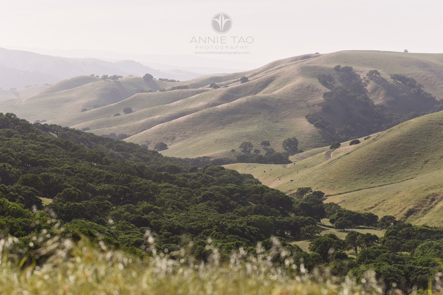 east-bay-lifestyle-photography-rolling-hills