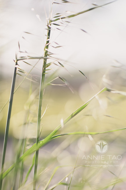 East-Bay-photography-concept-shoot-long-grass-weeds