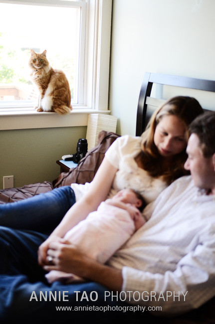 San-Francisco-newborn-photography-family-in-bed-cat-at-window