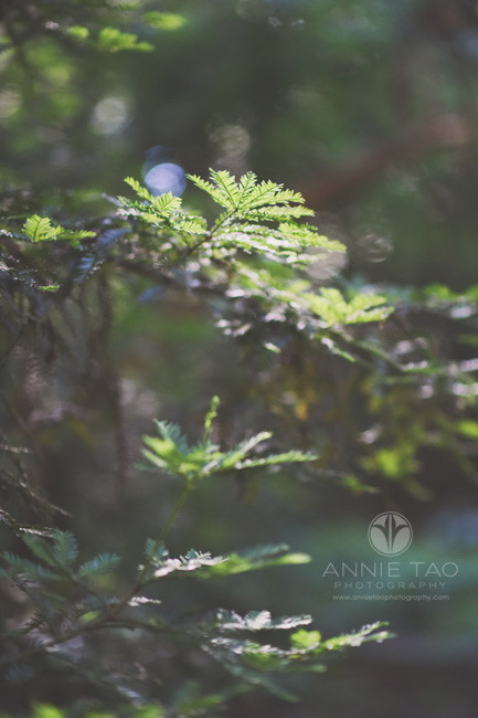 East-Bay-lifestyle-photography-pine-needle-branches-in-Forest
