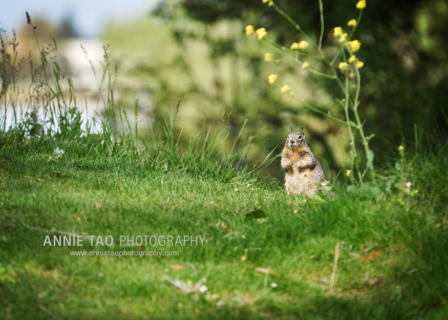 Clm-Squirrel-CloseUp