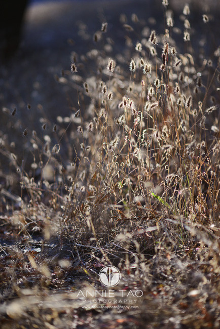 East-Bay-lifestyle-photography-dunno-some-kind-of-dry-plant-in-forest