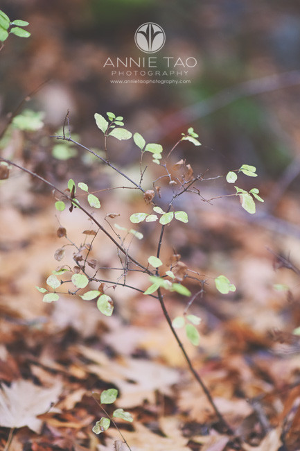 Bay-Area-lifestyle-photography-teeny-tiny-green-leaves