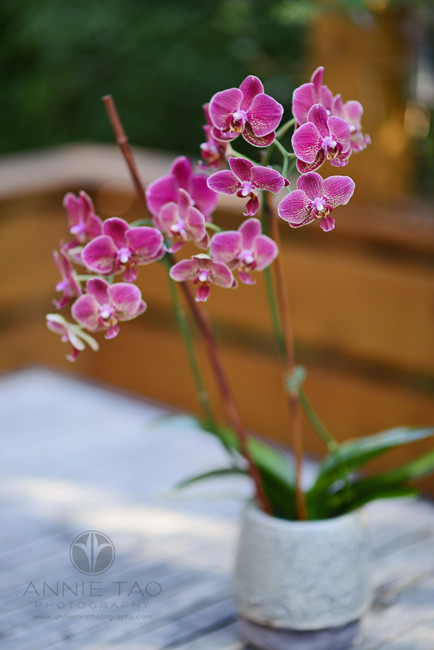 East-Bay-lifestyle-photography-orchids-on-patio-table