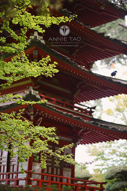 San-Francisco-lifestyle-photography-japanese garden-structure-with-tree