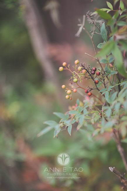 East-Bay-lifestyle-photography-berries-on-bush