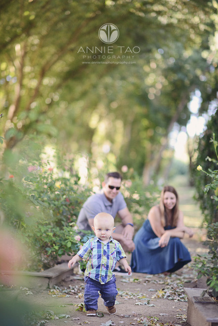 East-Bay-lifestyle-baby-photography-one-year-old-boy-walking-thru-rose-garden-with-parents-watching
