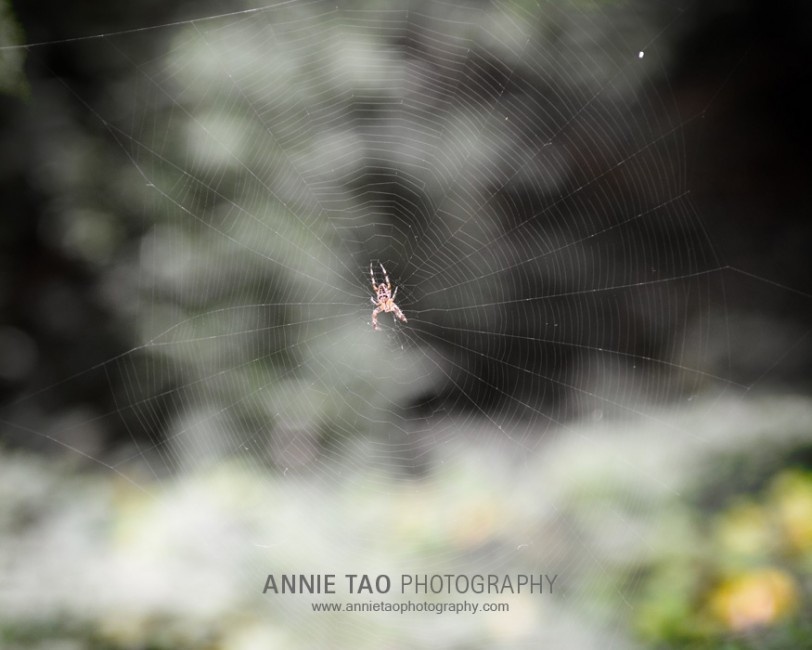 East-Bay-lifestyle-family-photography-spider-on-a-web
