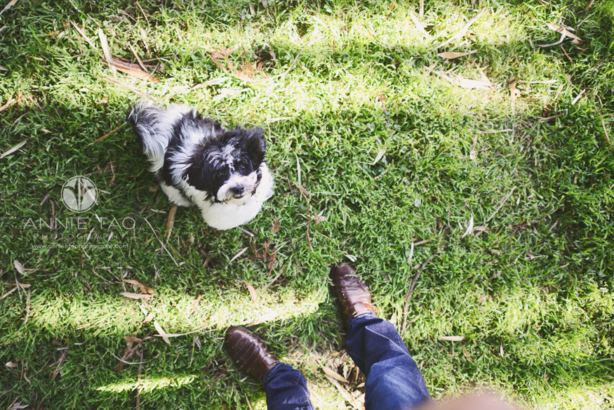 Bay-Area-lifestyle-pet-photography-downward-view-of-puppy-from-persons
