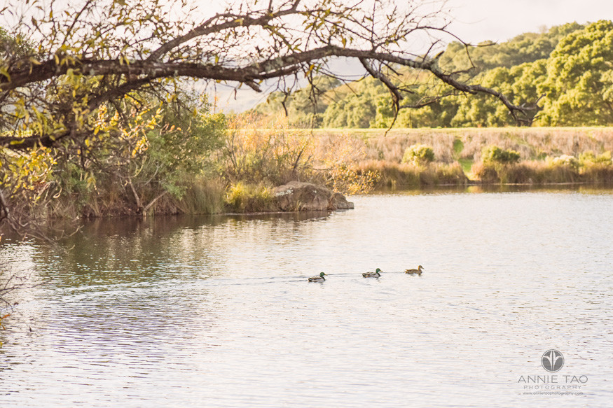 San-Francisco-bay-area-lifestyle-photography-ducks-swimming-in-lake