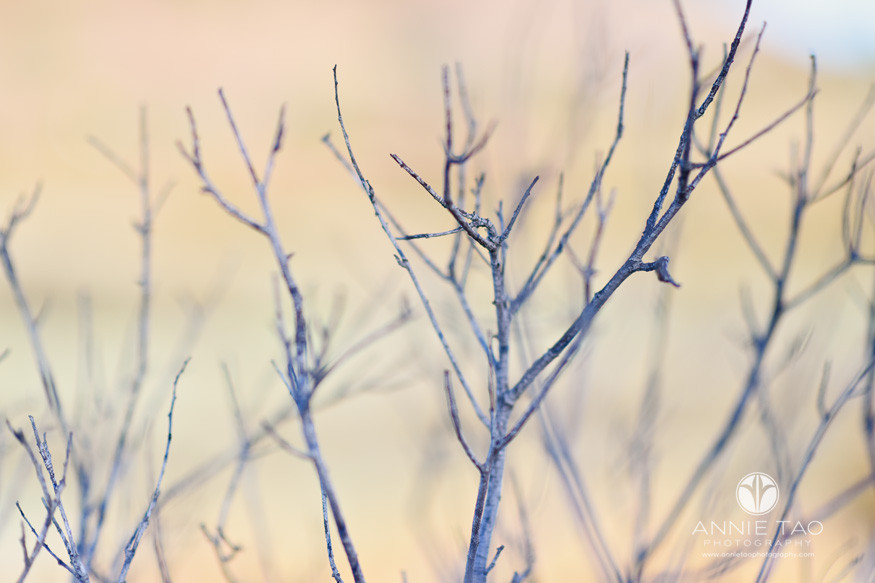 South-Bay-lifestyle-photography-dry-twigs