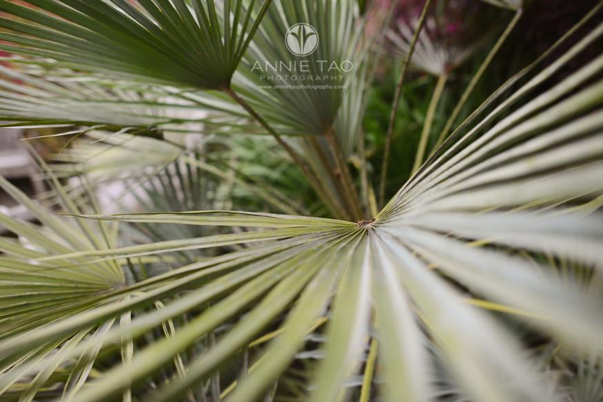 san-francisco-lifestyle-photography-green-fan-like-leaves