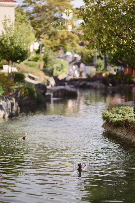 East-Bay-lifestyle-photography-ducks-swimming-toward-me-cuz-they-think-I-have-food-wrongo