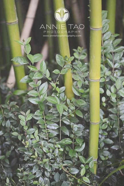 Bay-Area-lifestyle-photography-bamboo