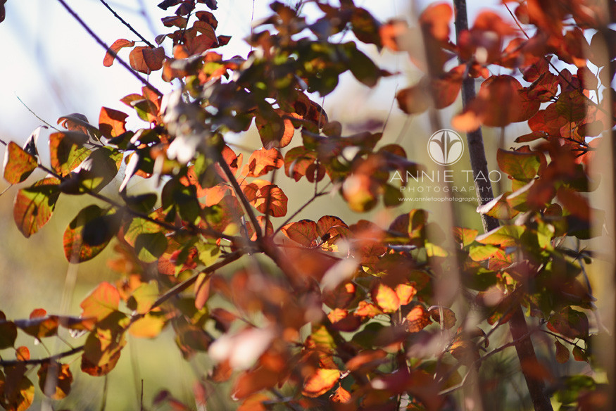 East-Bay-lifestyle-photography-leaves-illuminating-in-sunlight