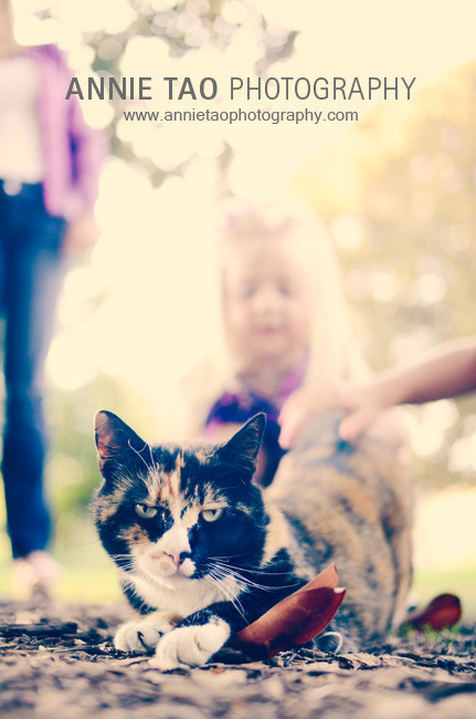 South-Bay-lifestyle-family-photography-petting-a-stray-cat