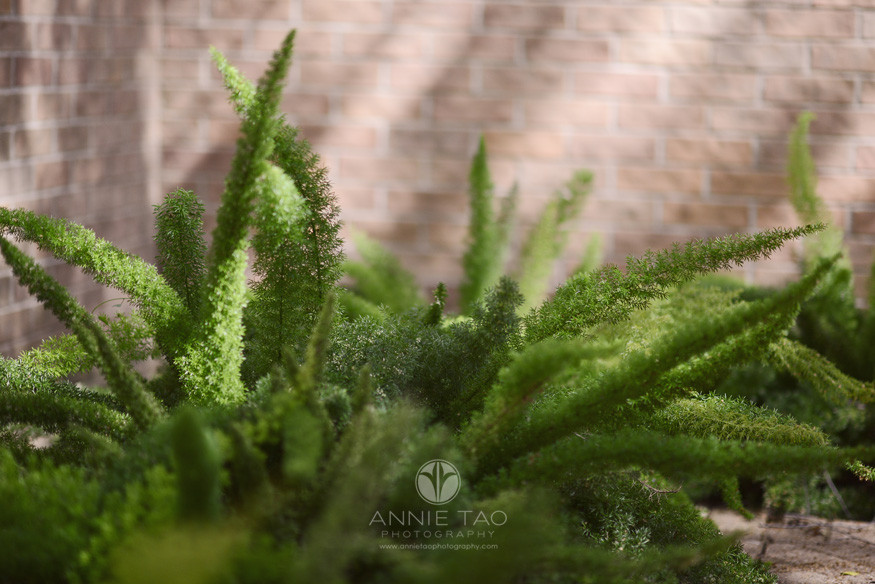 Commercial-education-photography-school-grounds-bushes