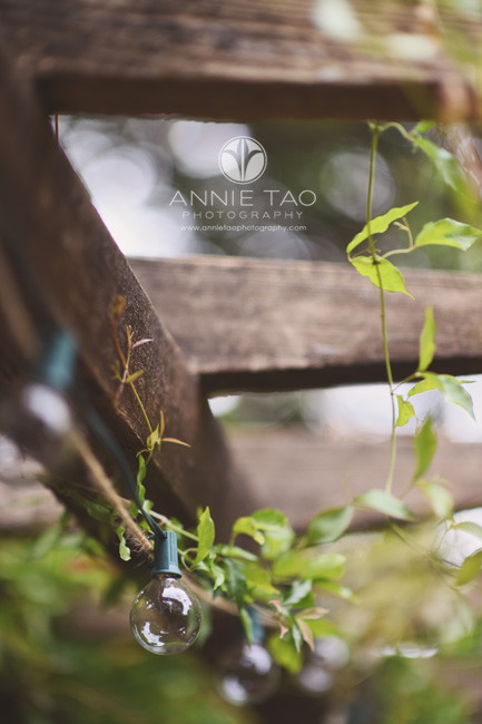 Bay-Area-lifestyle-photography-vines-and-lightbulb