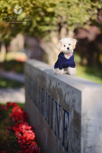 South-Bay-lifestyle-pet-photography-cute-white-puppy-sitting-on-sign