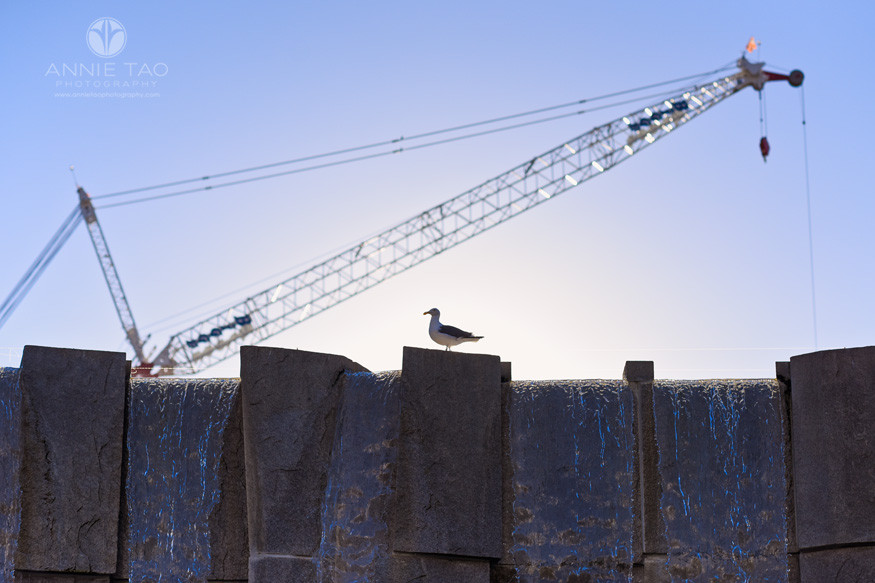 San-Francisco-lifestyle-photography-seagull-standing-on-waterfall-with-giant-crane-behind