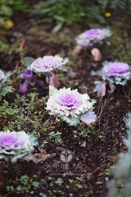san-francisco-lifestyle-photography-purple-cabbage-looking-plants