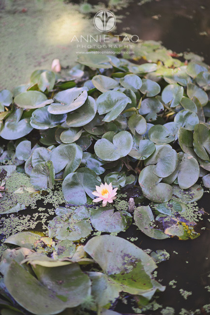Bay-Area-lifestyle-photography-pond-with-lilies