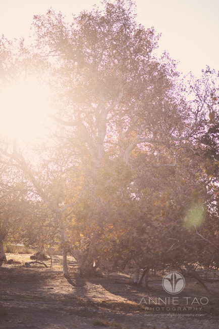 East-Bay-lifestyle-photography-trees-in-morning-light