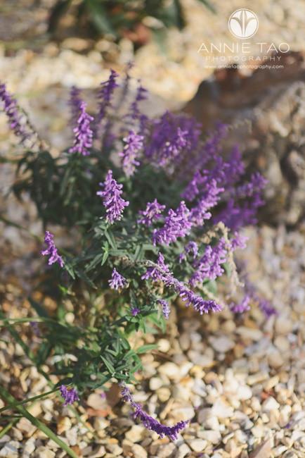 San-Francisco-lifestyle-photography-purple-flowers