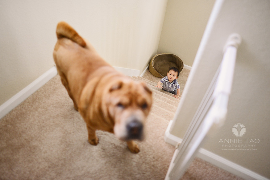 South-Bay-lifestyle-baby-photography-baby-at-bottom-of-stairs-and-dog-at-top
