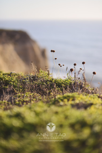 Bay-Area-lifestyle-photography-cliffside-plants-during-sunset