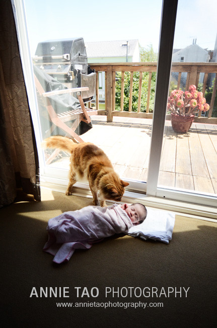 San-Francisco-newborn-photography-cat-checking-out-the-baby