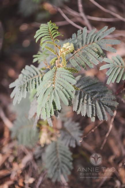 San-Francisco-lifestyle-photography-interesting-plant-in-Presidio