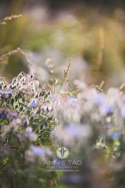 San-Francisco-commercial-photography-purple-wildflowers