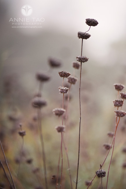 San-Francisco-Bay-Area-lifestyle-photography-wild-plants-in-the-fog