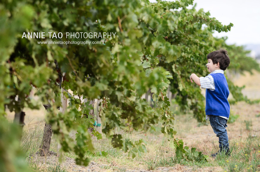 San-Francisco-East-Bay-family-photography-toddler-boy-looking-at-grapes