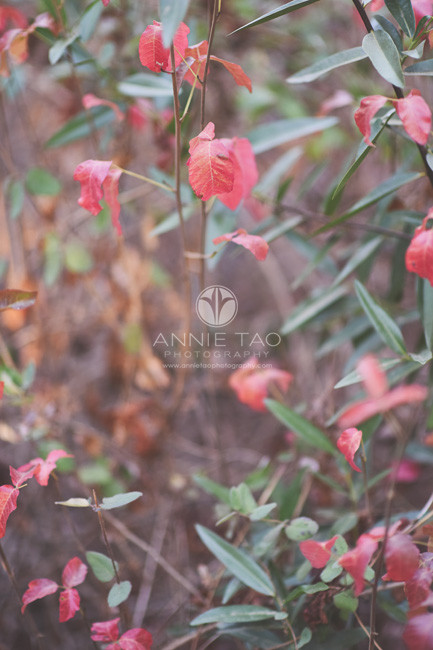 Bay-Area-lifestyle-photography-red-leaves-in-bushes