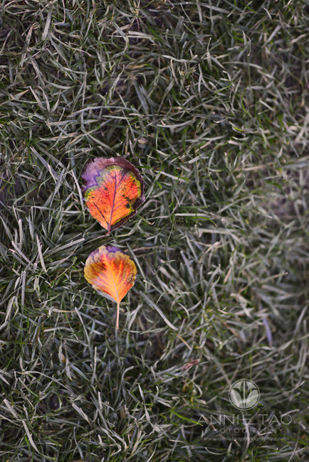 San-Francisco-lifestyle-photography-two-autumn-leaves-on-grass