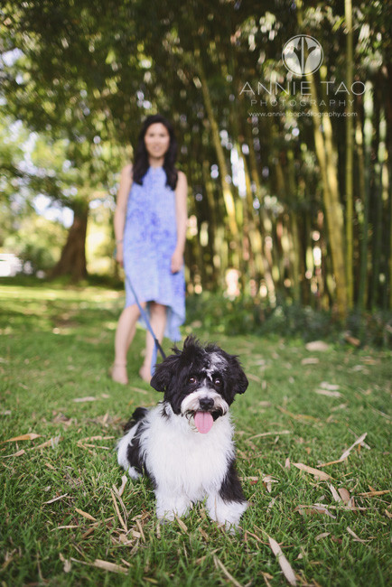 Bay-Area-lifestyle-pet-photography-black-and-white-puppy-on-leash