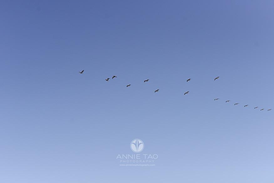 San-Francisco-lifestyle-photography-birds-flying