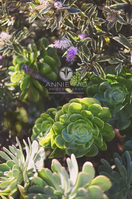 san-francisco-lifestyle-photography-succulents-by-the-bay