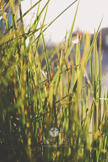 South-Bay-lifestyle-photography-long-grass