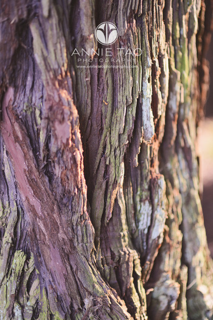 east-bay-lifestyle-photography-close-up-of-redwood-tree-bark