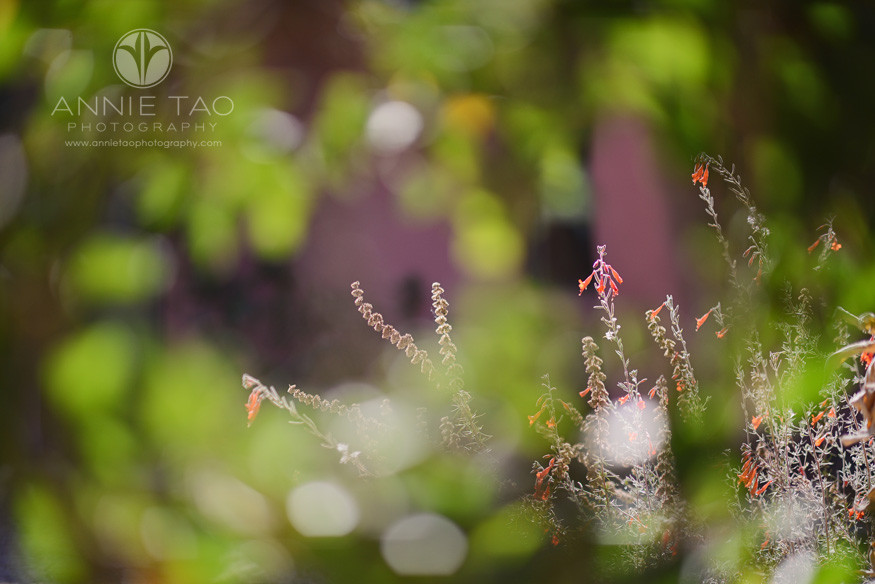 Bay-Area-Los-Altos-lifestyle-photography-tiny-red-flowers-seen-through-green-leaves